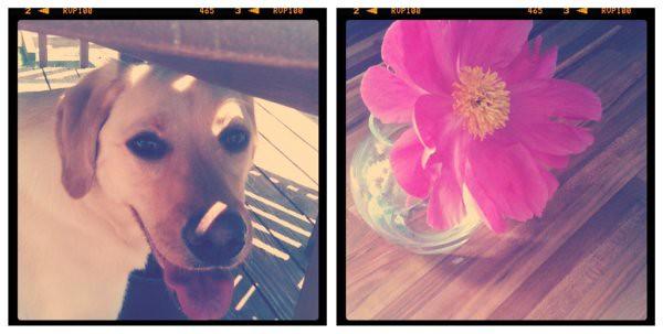 mill & flower