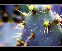 You'll Poke Your Eye Out Kid! (More Vibrance) (kroess.photo.) Tags: cactus plants house ny nature gardens ouch botanical buffalo erie depth myeye