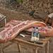 Piggy Dinner