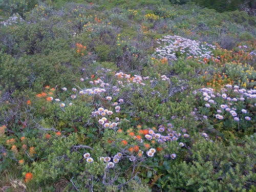 san bruno mtn flowers.jpg