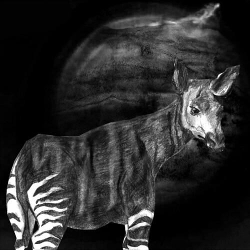 Okapi #4