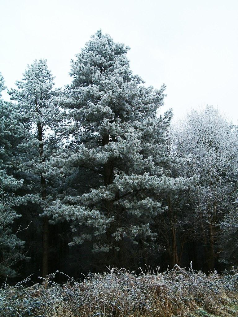 HPIM1075.  Raynham.frost