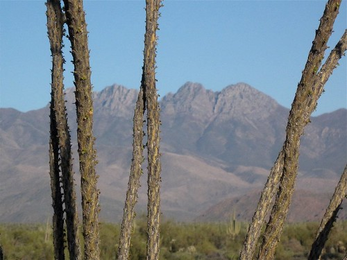 Four Peaks Behind Ocotillo