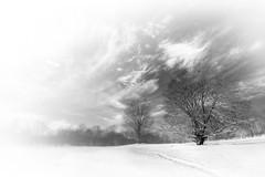 Battlefield (Patrick Campagnone) Tags: winter blackandwhite snow photoshop ma newengland february concord lightiq