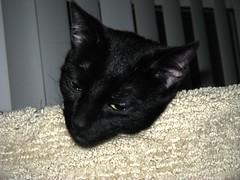 cat symptoms
