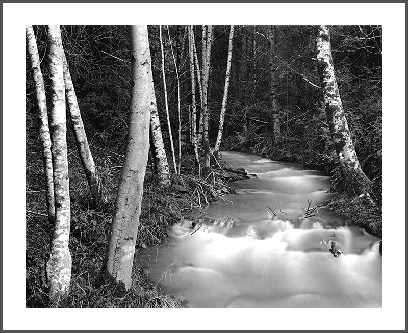 Alder Creek, Photograph by Rick Knepp, All Rights Reserved