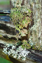 project365_20/365 (dmacphoto) Tags: wood stilllife macro green oneaday fence moss close bokeh photoaday lichen mendocino 365 pictureaday mendocinocounty project365 danielmacdonald dmacphoto danielmacdonaldphotographer dmacphotocom