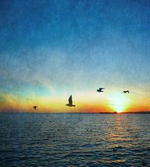 Fly Free... (jami_lee) Tags: ocean blue sea sky orange sun seagulls texture birds boat horizon