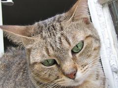 Florzinha (Mel1st) Tags: cat kat chat gata neko katze macska kot kats kedi koshka katt kato kissa kon florzinha meo ronronovisky paka kocka fato macka feles pussi negru chatul popoki qit kutjing miston maaoh mist