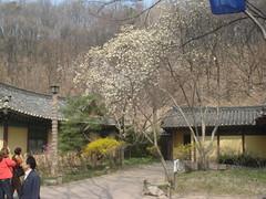 DSC01000 (Turansa Tours) Tags: yongin aldea folclorica