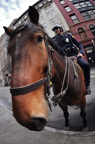NYPD Snout