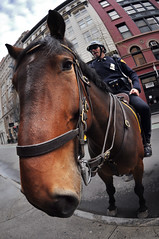 NYPD Snout (laverrue) Tags: nyc horse blog manhattan soho police nypd cop mounted blogged gothamist snout mountedpolice princestreet eplore mountedcop explored theturntable