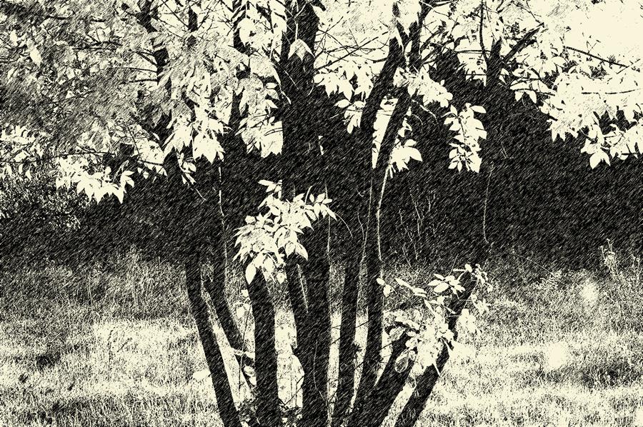 alandalas-286