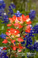 Paintbrush Stems