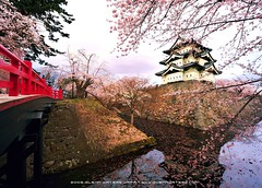 Hirosaki Castle  Glenn Waters (Explored).   1,600 visits to this photo.  Thank you. (Glenn Waters in Japan.) Tags: bridge castle water japan reflections nikon explore  sakura cherryblossoms samurai hirosaki moat japon edo  14mm japanesecastle   5photosaday explored   nikond700  glennwaters nikkorafs1424mmf28