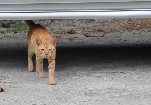 你拍攝的 cat。