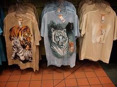 tigers! (secretagentmartens) Tags: tiger worldslargesttruckstop babywhitetiger
