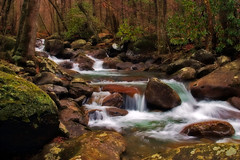 Softly (Nwbama) Tags: nature water nationalpark moss rocks stream tennessee rhododendron milky greatsmokymountains greenbrier platinumphoto nwbama steveminor