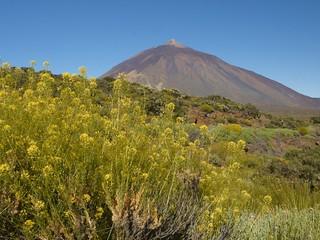 Pico Teide y Hierba Pajonera