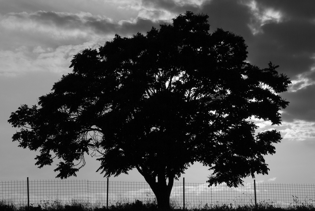 black and white tree photos. lack amp; white tree