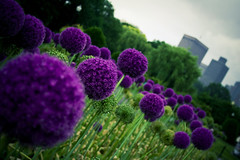 (morgan.laforge) Tags: city flowers summer nature skyscrapers bostoncommon