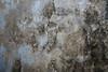 guadalajara chunky moldy wall