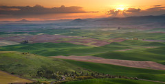 Palouse Spring Sunrise (Ryan McGinty) Tags: light clouds sunrise landscape washington spring wheat hills palouse floweringtrees steptoebutte ryanmcginty