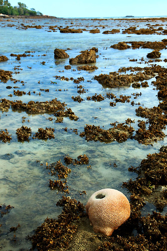IMG_3045-w Coral