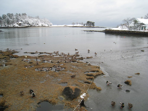 Snow, Beach, and Geese