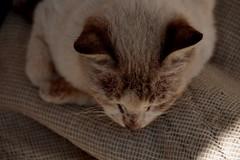 تحتضر (gney) Tags: cat smelly قطة قطوه بتموت