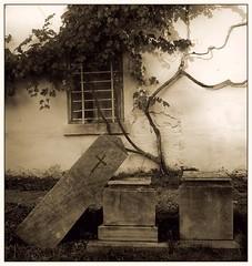 elhagyott temető