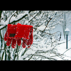 ... and found (JannaPham) Tags: winter red white snow tree lamp canon garden square found lost eos branch russia bokeh moscow gloves tuesday karma russianwinter 500x500 goldengarden project365 40d jannapham