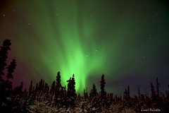 Northern Lights (Akfirebug) Tags: green alaska nightsky soe fairbanks northernlights 5am addedcontrast akfirebug falcetta spiritofphotography thewayitlookedfeb4th