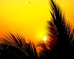 A Golden Dawn , and a new day is born. (Sunciti _ Sundaram's Images + Messages) Tags: sunrise landscape figurines soe sow bestshot smorgasbord naturesfinest otw kaledioscope unityindiversity beautifulexpression platinumphoto anawesomeshot impressedbeauty aplusphoto skycloudssun agradephoto flickraward flickerdiamond mycameraneverlies flickrdiamonds inspirationhappiness concordians goldstaraward flickrestrellas brilliantphotography fabulousflicks spiritofphotgraphy artofimages savebeautifulearth mawesomescenery flickerdiamonds flickrestrel winklerians