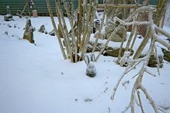Just the rabbit's head peeking out. (junebug_1944) Tags: icestorm eurekaspringsar january2009