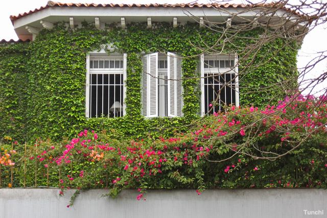 Naturaleza Casera