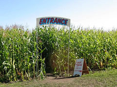 The Art Institute of Portland visits the Kruger's Farm Corn Maze