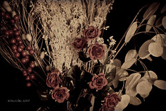 Fake Roses Still Life... (Craig - S) Tags: life roses flower still weeds day spray valentines agedphoto otherjunk supershot yesiknow sterk1 itsgirlie