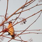 Birds 23.12.2006