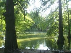 Faenza (manola nicoletti) Tags: parco verde green nature garden natura pace manola bucci faenza tranquillit armonia nicoletti