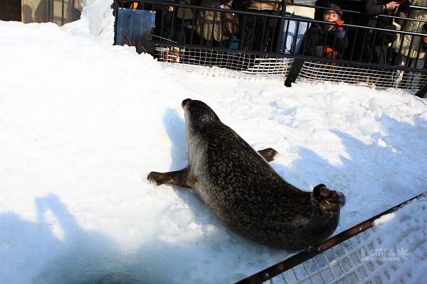 2009北海道-D5-3-旭山動物園_72.jpg