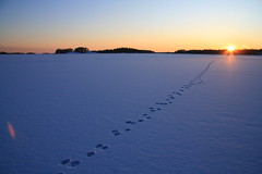 tracks on the sea (Fredww) Tags: winter sea ice espoo finland karhusaari
