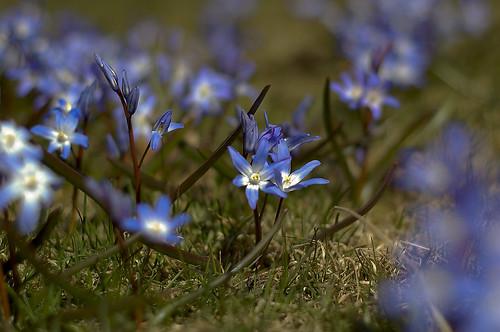 86B:365第一个野花(3个)