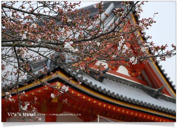 【京都春櫻旅】京都旅遊景點必訪~京都清水寺之美京都清水寺10