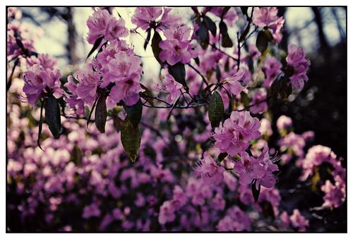 Gunnebo - blommor-21