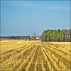 ~ Cropped Crops Cropped ~ (ViaMoi) Tags: ontario canada field farmhouse spring corn farm bluesky silo rows crop vernon digitalcameraclub mywinners abigfave platinumphoto aplusphoto viamoi 100commentgroup