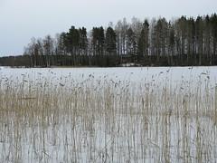IMG_0448 (cloning girl) Tags: finland frozenlake finlandia lagohelado