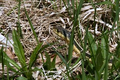 A Snake in the Grass 7702