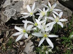 IMG_1492 (Emanuele Lotti) Tags: italia fiori toscana pisani monti pegaso