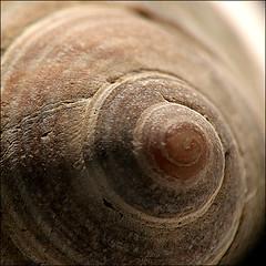 ~ The Shell ~ (ViaMoi) Tags: sea macro texture spiral natural shell seashell depth digitalcameraclub aplusphoto viamoi
